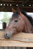 le cheval dans la stalle. photo