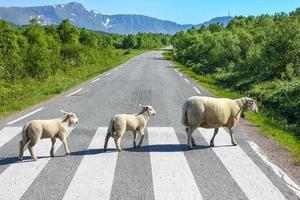 traversée d'une route de campagne photo