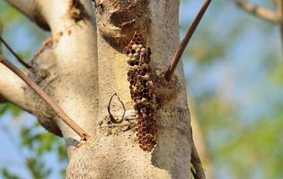 un nid de frelons photo