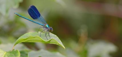 libellule en forêt photo