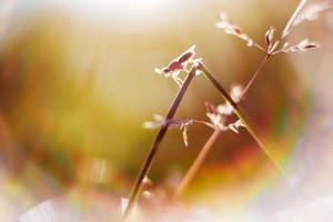 plante et coléoptère photo