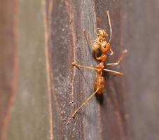 nymphe en mouvement fourmi bouchent photo