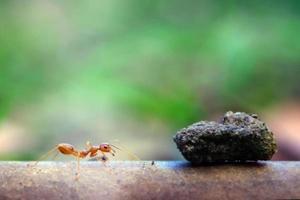 fourmi petit monde (macro, environnement de mise au point sélective sur fond de feuille)