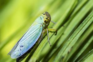 portrait d'un bug photo