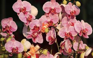 orchidée papillon photo