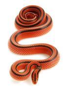 serpent à rats en bambou thaï photo