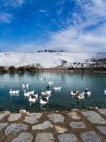 canards et montagne de neige photo