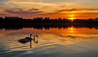 coucher de soleil avec des cygnes photo