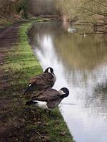oiseaux lavés