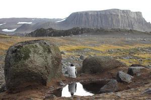 eselspinguine in der antarktis photo