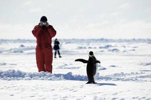 homme prenant des photos de pingouin