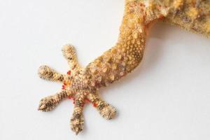 jambe de gecko