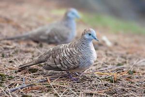 oiseaux d'Hawaï photo