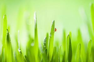 détail de l'herbe