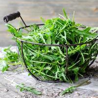 ruccola pour salade verte fraîche