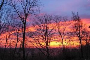 forêt au coucher du soleil photo