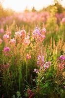 fleurs. photo