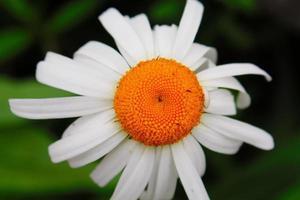 fleur. photo