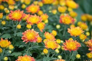 fleurs photo