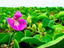 fleur photo