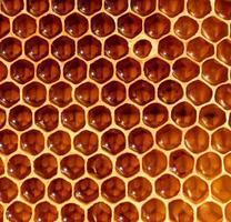 fond de nid d'abeille photo