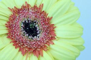 fleur