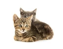deux chatons mignons sur blanc photo