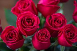 roses rouges photo