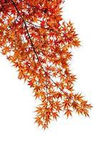 feuille d'érable le temps d'automne sur un fond blanc isolé photo