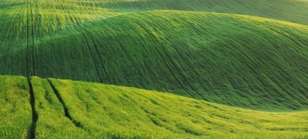 champ vert photo