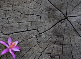 fleur rose dans le coin de la souche