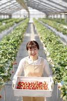 producteurs de fraises