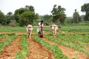 agriculteur labourant photo