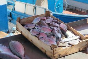 marché aux poissons photo