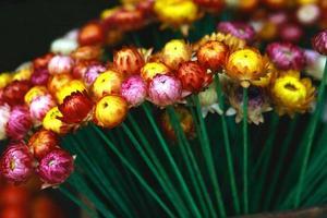fleurs artificielles photo