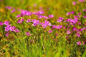 fleurs sauvages photo