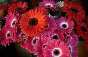 pouvoir des fleurs photo