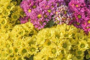 belles fleurs photo