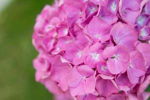 Les fleurs photo