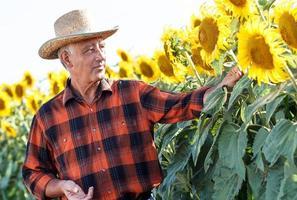 Agriculteur senior dans un champ d'examen des cultures