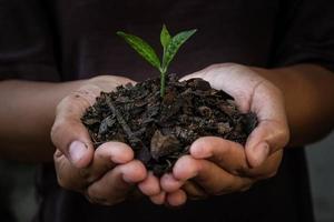 mains tenant la jeune plante. photo