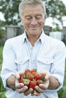 Man on allotment holding fraises fraîchement cueillies photo