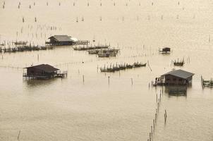 pisciculture en cage photo