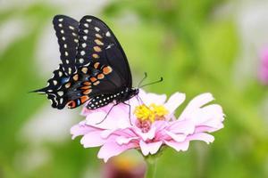 papillon fleur photo