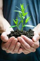 mains humaines, tenue, plante verte, closeup photo