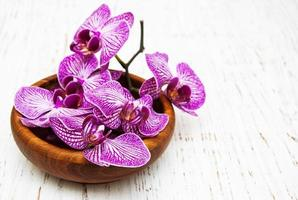 bol avec orchidées photo