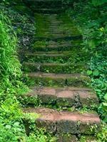 escalier avec mousse en saison de mousson