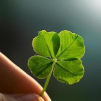 doigts, tenue, rétro-éclairé, quatre feuilles, trèfle photo