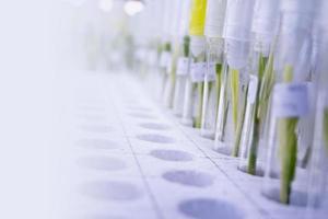 culture de tissus végétaux