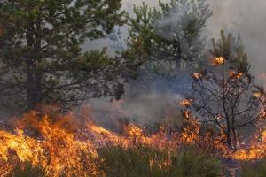 feu de forêt de pins photo